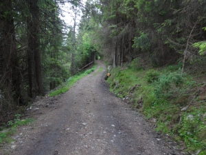 "Pronounced ""Stook-srood-waygen,"" this is the road to the farm. First impression was of Tolkien's Shire - deep woods, moss and fern undergrowth and mystical looking rock outcroppings."