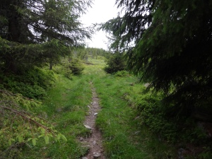This trail leads up to the Mountain Farm above, in Norwegian, called the Seter.