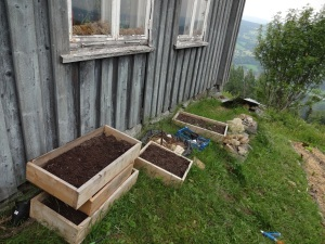 Starter beds line the farmhouse, my host Hanna has planted several experimental crops in these boxes - including hops!