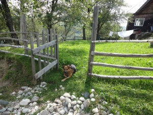 My close friend in Transylvania, Puppy. Puppy is a shepherd dog that claimed Arabella as his de facto master and now lives on her property. A handsome hound, he is forever howling in the night and happy to see newcomers.